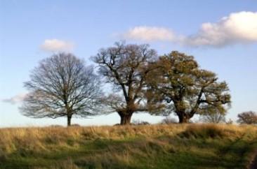 Trzy drzewa